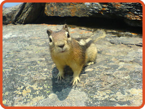 Inquisitive Chipmonks Want to Know.